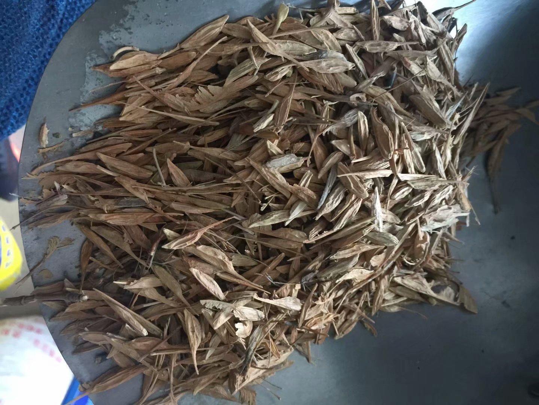 供应糖槭种子去棍去叶三遍机选