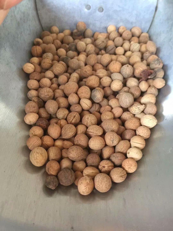 辽宁省 小桃红种子 多少钱一斤