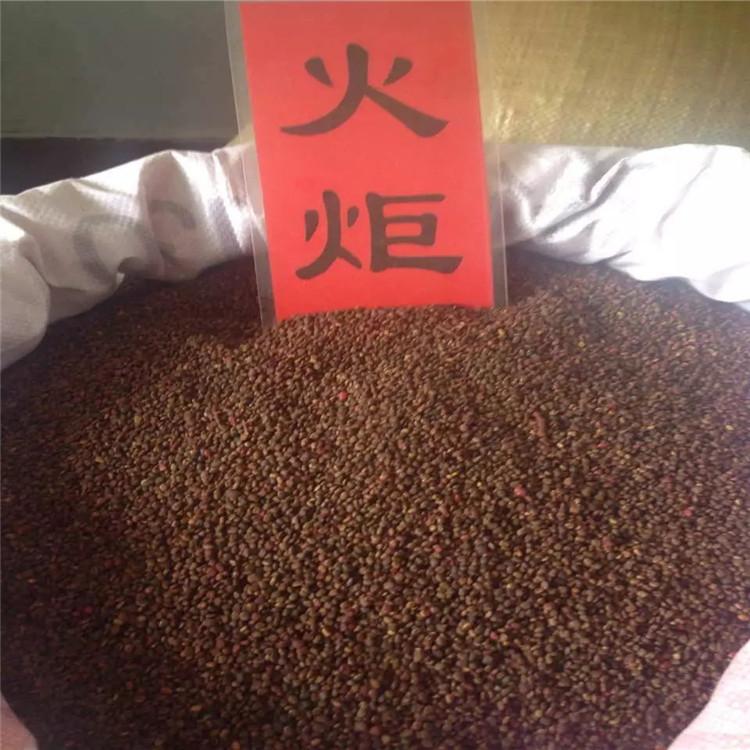 辽宁省 火炬种子 批发价格多少钱