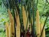 四川珍稀树木能否走上产业化之路