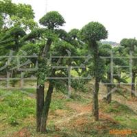别墅、小区精品---榆树