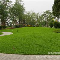 马蹄金-供应四川 重庆 云南 手工机器起马蹄金草皮 批发销售厂