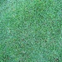 句容大量批发草坪 草种-百慕大草坪 马尼拉草坪 果岭草 草坪