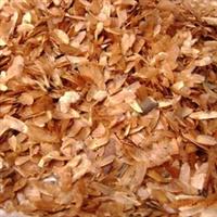 香椿种子红油香春