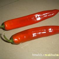 供海南产特级新鲜的美人椒