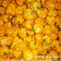 供海南特级新鲜的黄灯笼辣椒