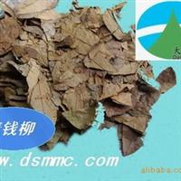 青钱柳(天然保健茶 降血糖)