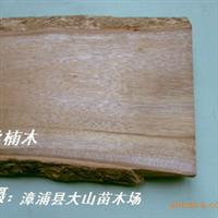 闽楠(金丝楠木,香楠,名贵家具用材林)厂