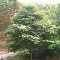 供应铁力木(红木类 铁梨木、铁栗木)厂