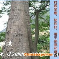 顶果木(生长很快 不怕霜冻 耐寒零下-4.5℃ 耐干旱贫瘠)