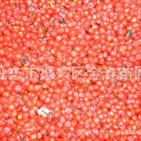 丹东金春苗圃供应优质                  红豆杉种子
