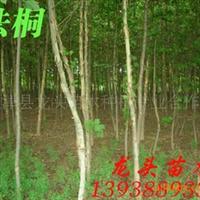 法桐,绿化苗木,乔木,花灌木,灌木