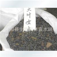 大量批发臭椿种子香椿种子黄栌种子发芽率高