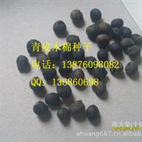 青皮木棉种子 80元/斤厂