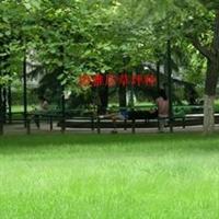 公园,小区庭院专用草坪种子 黑麦草曼哈顿4号 15元一斤