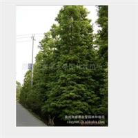 【质量保证】l厂家直销 供应各种规格的   楠木厂