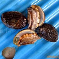 供应鲍鱼---大嶝鲍鱼之品种大连皱纹盘鲍