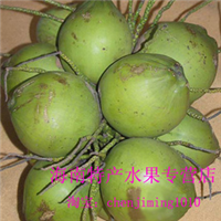 椰子/海南青皮椰子/椰青/椰王/新鲜水果椰子果园采摘供应批发