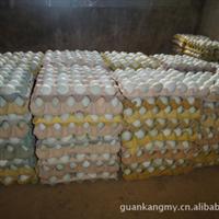 乌鸡蛋 绿壳鸡蛋,官康绿壳保健蛋