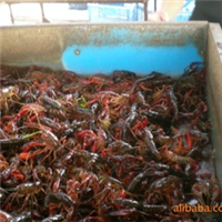 水产食品(图)、农业水产养殖、宜城大虾,免费咨询