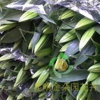 批发供应昆明斗南金朵园花卉西伯利亚白百合鲜切花批发