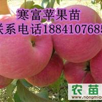 山丁子苗,123果树苗,红叶李子苗