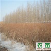 哈尔滨珍珠绣线菊苗木基地丨首选哈尔滨高大鹏苗木基地
