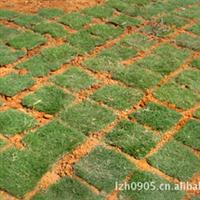 耐寒耐寒、护坡绿化【草坪草皮】
