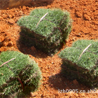 福建绿大地:绿化苗木【草坪草皮】