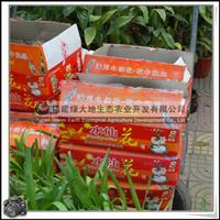 水仙花|水仙花球种植|产地漳州|水仙花怎么养
