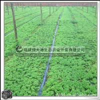 佛甲草|屋顶绿化苗|优质绿化草坪|多年生草本植物