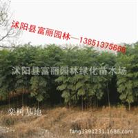 栾树-基地批发栾树2-3-4-5-6-8-10公分。枫杨,国槐,樱花,垂柳