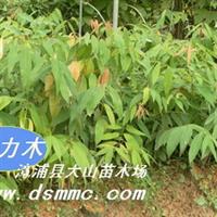 供应铁力木(红木类铁梨木、铁栗木)