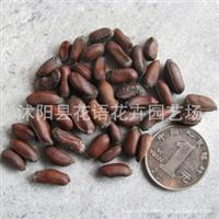 现货出售绿化种子腊梅种子花卉种子苗木种子