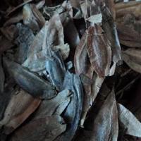 低价批发新采林木树种药材种子杜仲种子胶树种子提供技术说明