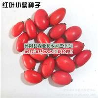 出售当年新采苗木种子,红叶小檗种子(净籽),150元一斤