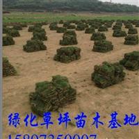 东莞草坪价格/草皮行情厂