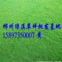 广西绿化草皮基地 广西草皮价格厂