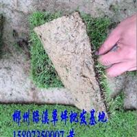 广西绿化草皮基地 广西草皮价格