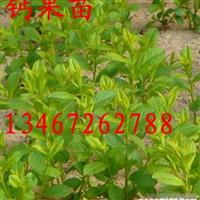 811012
