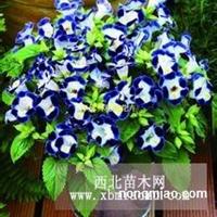 赤峰草花种子,花卉种子,花种子价格