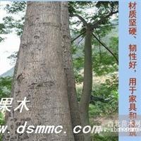供顶果木(速生林 顶果树 替代桉树)