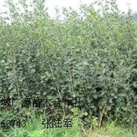 大量出售山楂苗苹果苗价格优惠