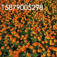 834704