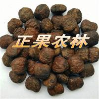 专业供应精选优质油桐种子