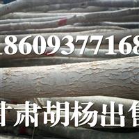 2-10cm甘肃胡杨(梧桐)出售