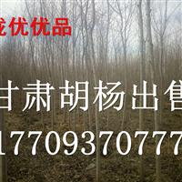 甘肃陇优胡杨出售2-10cm