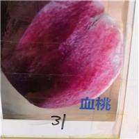 2018血桃大红桃一年苗1米8元