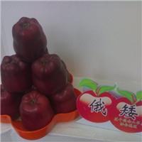 正宗天水花牛系列苹果苗木花牛苹果树苗