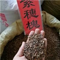 供应 棉槐种子 当年新货 质量保证